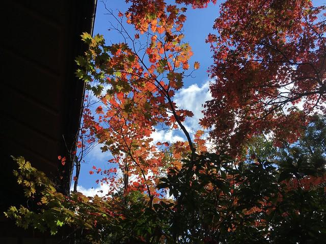 白天的庭院風景