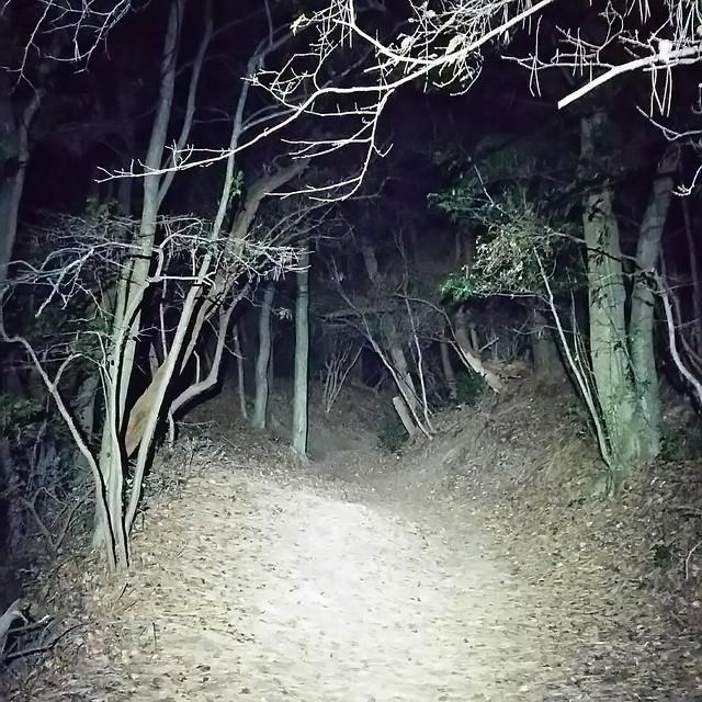 nighttrail201612 06