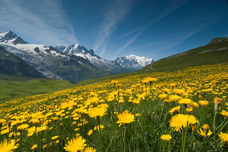 Meadow of Yellow Flowers and Mountains | by OneEighteen