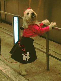 Poodle in a poodle skirt | by mockstar