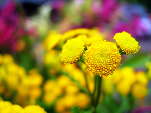 Farmer's Market / Tansy - Grand Rapids - Michigan - USA | by docksidepress