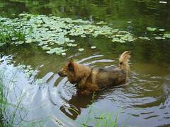 Reggie goes wading