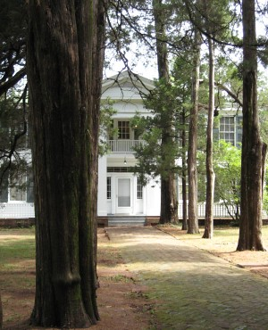 Rowan Oak | by Maud Newton