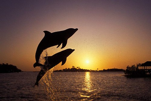 leaping_dolphins | by Zest-pk