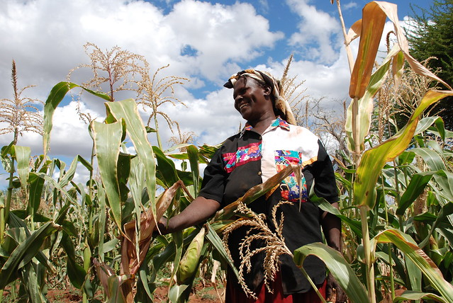 Drought tolerant maize route out of poverty for community-based seed producer, Kenya