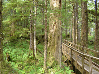 trail | by Tongass National Forest