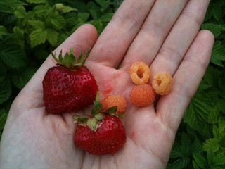 002 Roof Garden: Strawberries and Raspberries | by yougrowgirl