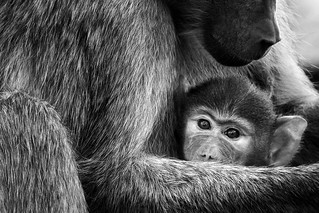Mother [ in ] Mono | by | HD |