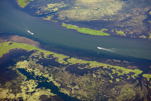 Tainted estuaries in the BP oil spill. | by Kris Krug