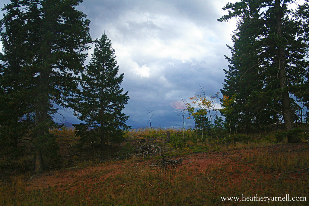 Woodland Park Forest
