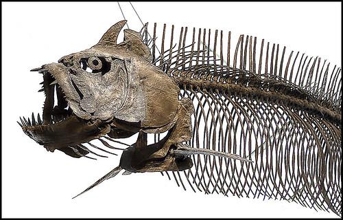 Jurassic Fish