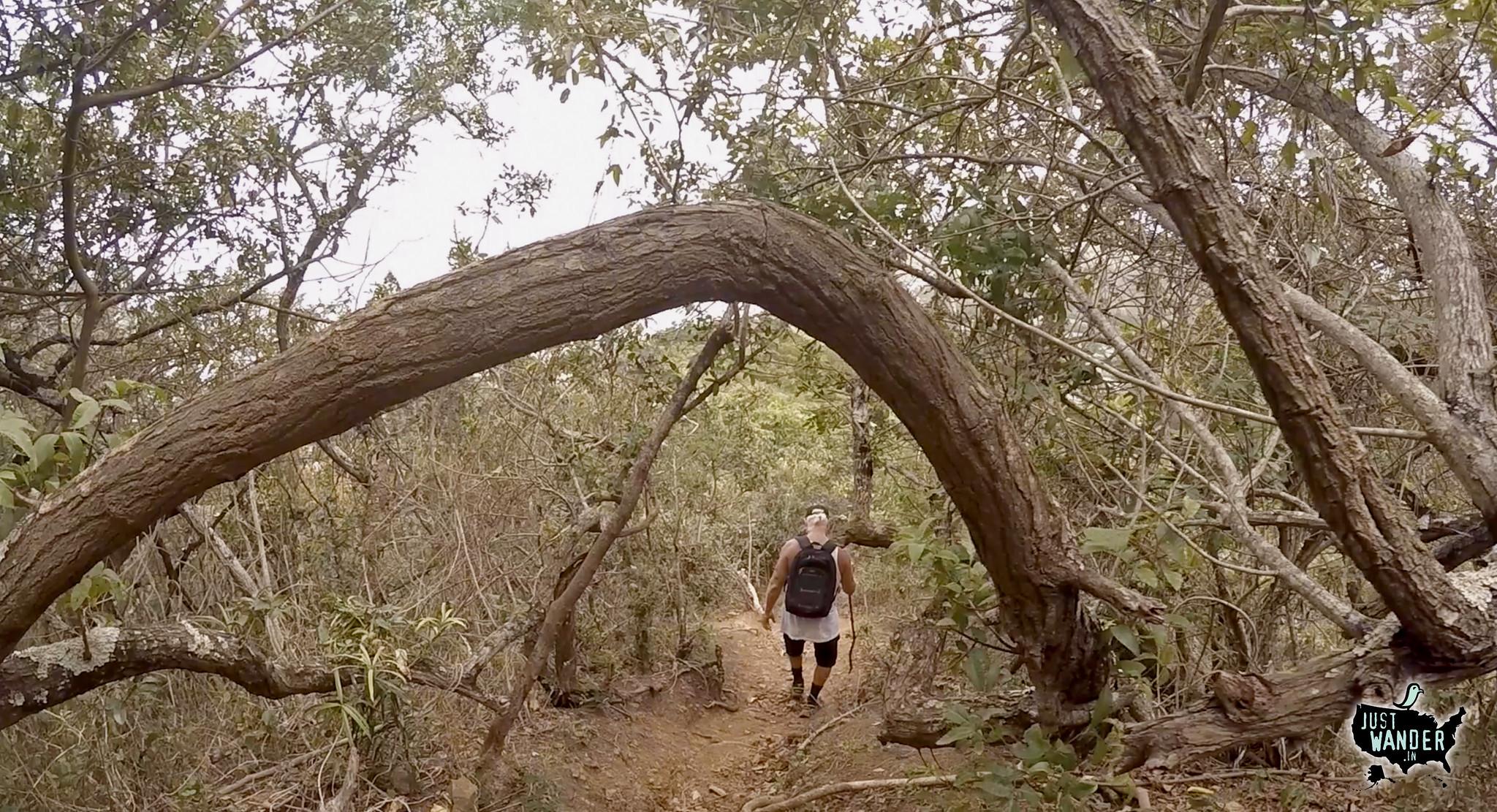 Bill Tree Arch
