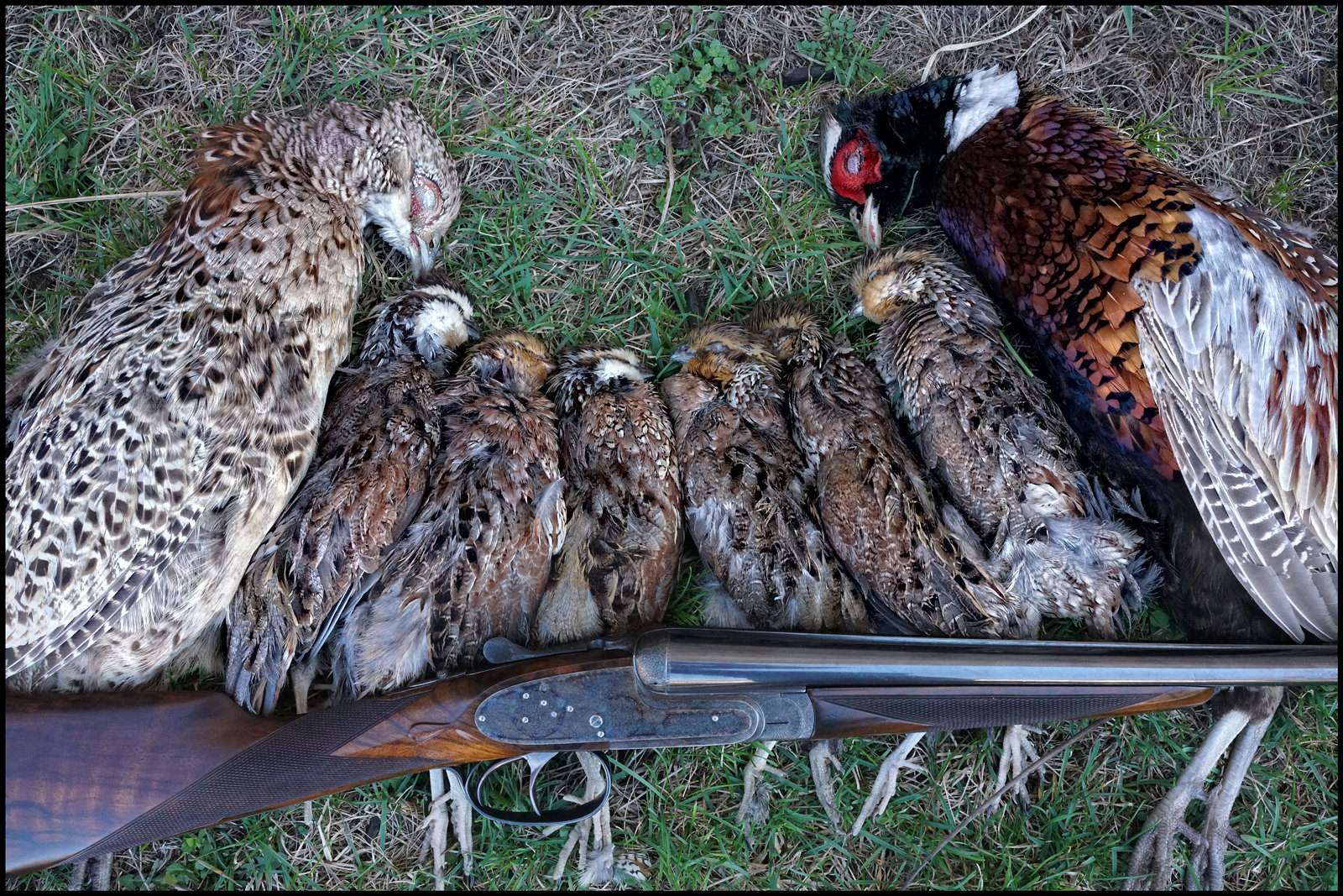 Thoughts on pheasant and prairie grouse guns.... - Page 2 - Firearms ...