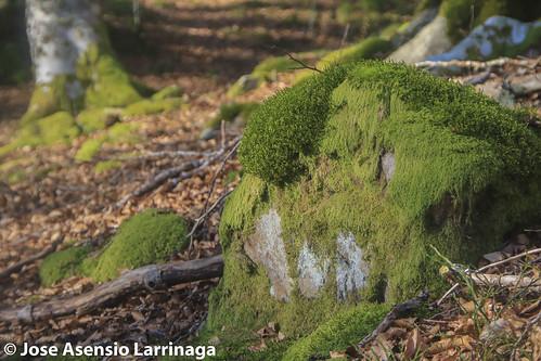 Parque natural de Gorbeia #DePaseoConLarri #Flickr -2798