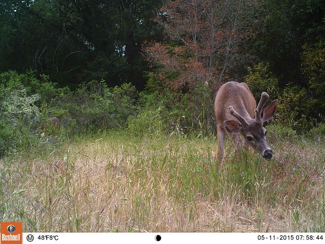 Marin Wildlife Picture Index Photos