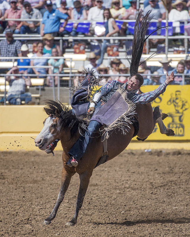 Red Bluff Round-Up Rodeo bareback