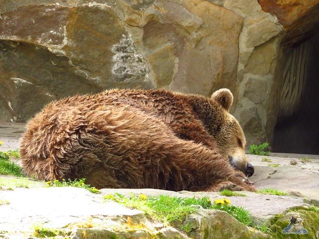 Zoo Berlin 29.04.2016   026