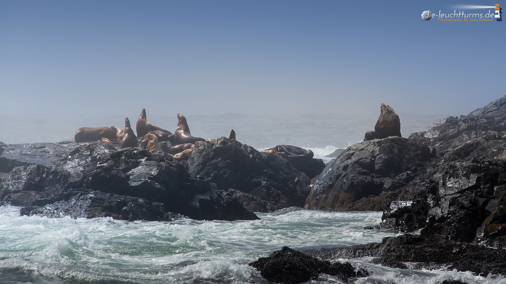 Steller sea lions on the Broken Islands