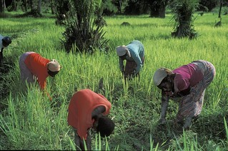 Women doing work on crops | by World Bank Photo Collection