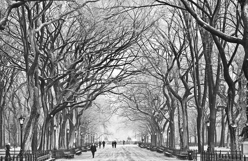 December in Central Park | by Thomas Hawk