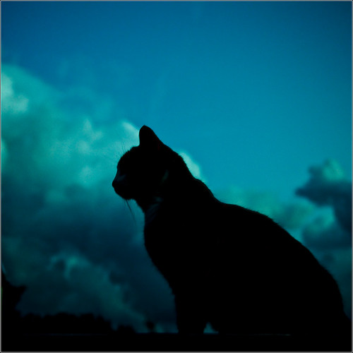 Cat in the Clouds | by johnr71