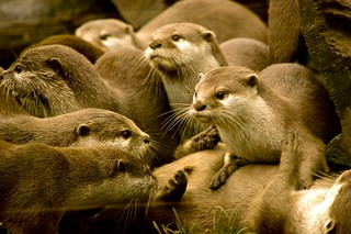 otters are so funny | by majeranek