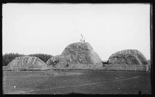 Haystacks | by Special Collections & University Archives (ISU)