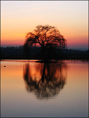 Sunset: The Magic Tree | by aga18 :)