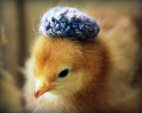 Chicks in Hats | by juliepersons