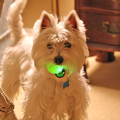 Wee Westie's Nuclear Ball | by Randy Son Of Robert