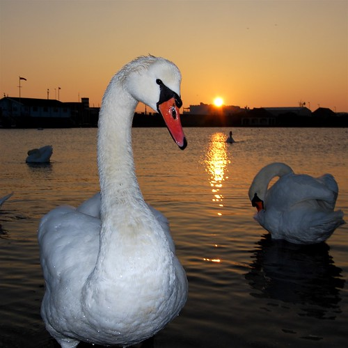 Swan glamour shoot | by Leonski