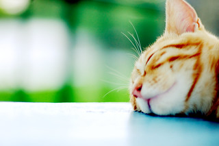 On a beautiful sunny day, leave me alone!! I am sleeping comfortably. Zzz.. Zzz... | by ღMayuღ