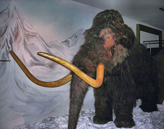 Woolly Mammoth - Horniman Museum, London. | by Jim Linwood