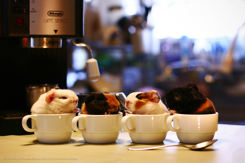 Sweet Coffees | by ©Pacifist