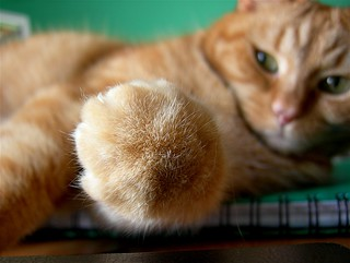 Talk to the paw! | by Mrs eNil