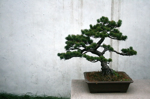 Bonsai | by horses and tigers