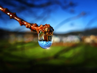 A Raindrop in a Suburb, a Suburb in a Raindrop | by Peter Kurdulija