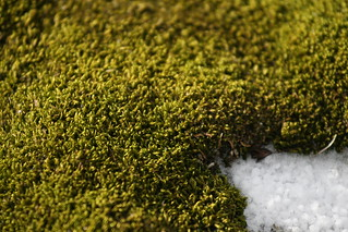 Moss on Aitcho Island | by xeno_sapien