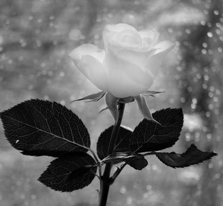 The softness of white | by Ben124.