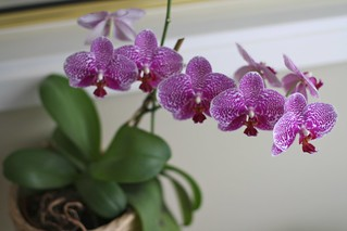 Orchids | by rbitting