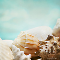COLLECTIONS {Shells II} | by Eva Ricci