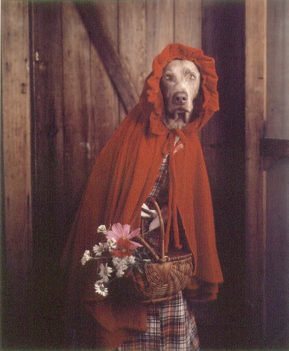 "William Wegman- ""Grandmother,"" she said, ""you look…"" 