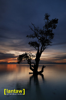 Maasim Sturdy Mangrove at Dawn | by lantaw.com