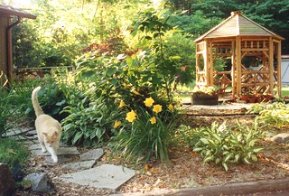 Bill the Cat taking a stroll thru the garden | by White Rabbit Inn B&B