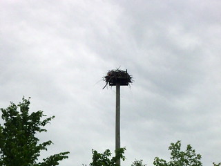 Osprey Nest | by Great Glen Trails