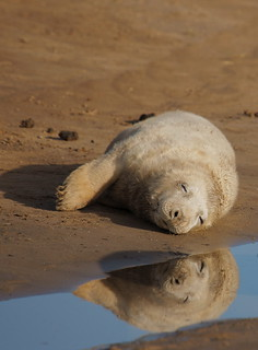 sleepy reflection | by Andy Coe