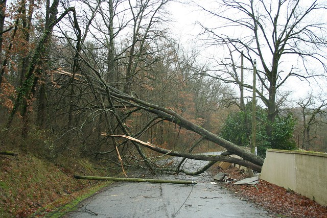 Fallen Tree after 'La Tempête Hivernale', Midi Pyrenees, France