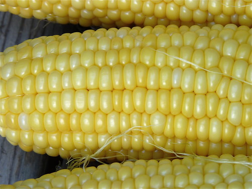 ear of corn | by normanack