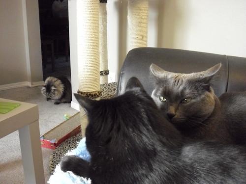 Cat Keeping Presants Mobile Phone Advert November
