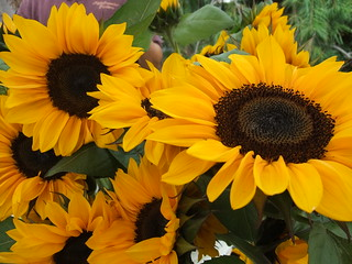 Sunflowers 10/3/09 | by swampkitty